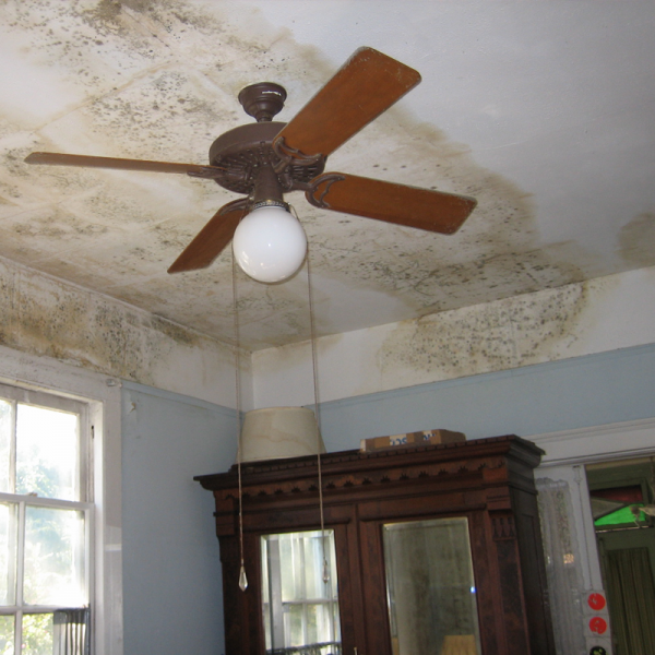 Danger in the Damp - Dealing with Mold